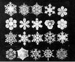 Photo via Snowflakes Bentley (Wilson A. Bentley)
