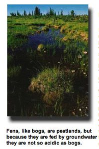 Fen photo via the USFS