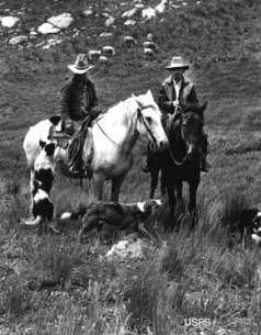 Sheep Herders on the Uncompahgre Plateau back in the day