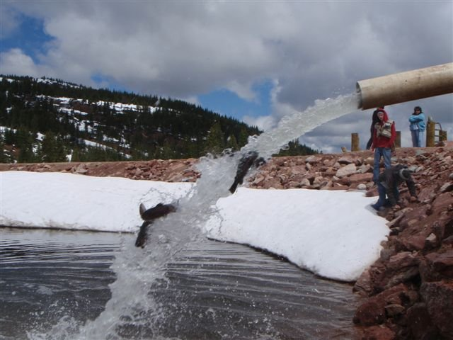 Cool photo of the week rainbows splashing into the black for Colorado fish stocking