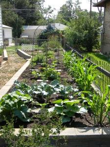 Mrs. Gulch's vegetable garden 2012