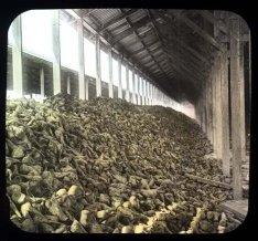 Sugar beets via UC Berkeley