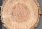 Douglas Fir tree rings via the Western Water Assessment