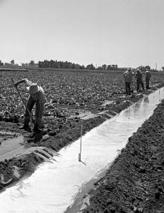 Flood irrigation -- photo via the CSU Water Center