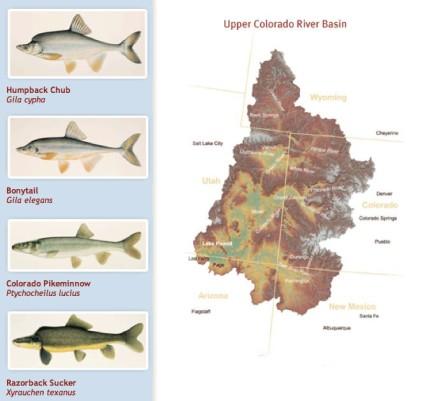 Upper Colorado River Endangered Fish Recovery Program