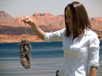 Quaggas on sandal at Lake Mead