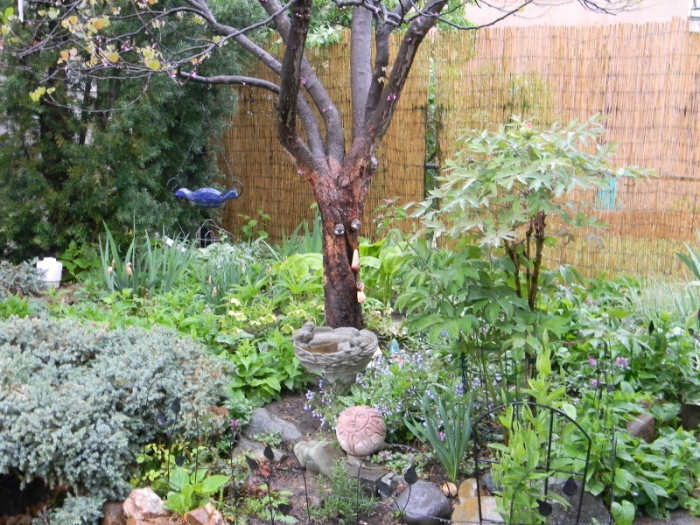 Mrs. Gulch's Moon Garden May 11, 2014