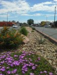 Looking for more inspiration? After taking a drive down West Colfax Avenue, check out the xeriscape demonstration gardens at Kendrick Lake in Lakewood.
