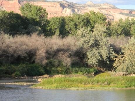 Colorado National Monument from the Colorado River Trail near Fruita September 2014