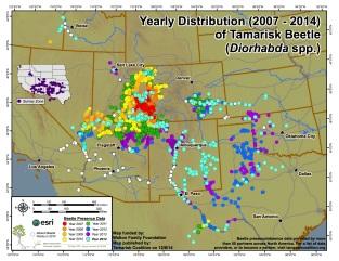 2014 Tamarisk leaf beetle distribution map via the Tamarisk Coalition