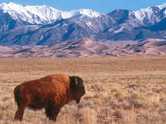 Alamosa National Wildlife Refuge via the National Park Service