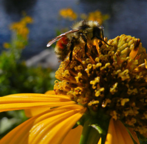 Bad for bees, bad for people? @bberwyn photo.