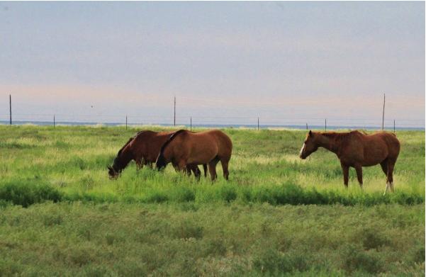 crowleycountyhorses