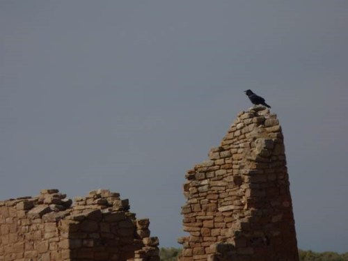 Raven on Hovenweep Castle