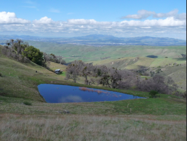 The Ohlone Reserve Conservation Bank in California, one of the many conservation banks run by the U.S. Fish and Wildlife Service. Photo credit: Robert Fletcher, Ohlone Preserve Conservation Bank