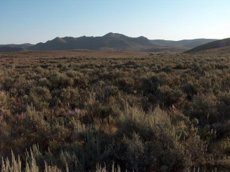 Sagebrush landscapes are important habitat for maintaining biodiversity in much of the United States. Image credit: Steve Knick, USGS.