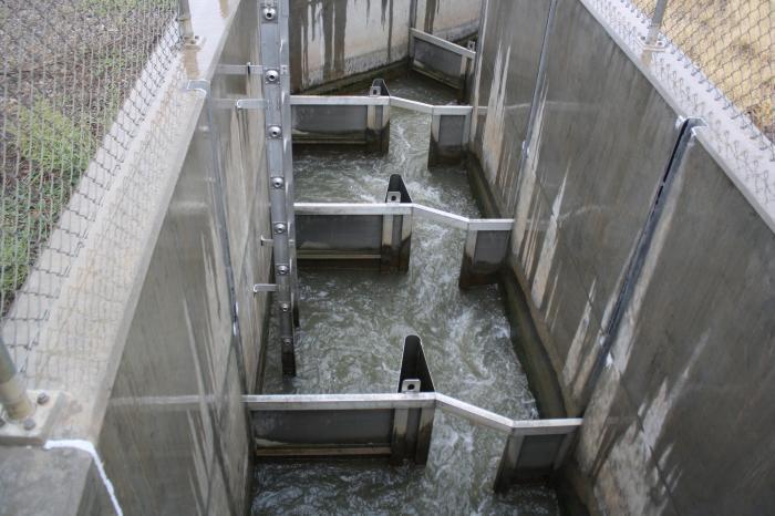 Fish ladder at the Redlands diversion dam via KVNF