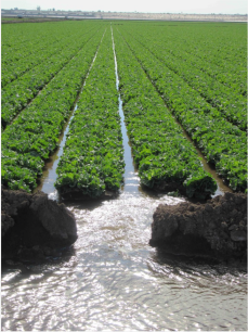 A field of produce destined for grocery stores is irrigated near Yuma, Ariz., a few days before Christmas 2015. Photo/Allen Best - See more at: http://mountaintownnews.net/2016/02/09/drying-out-of-the-american-southwest/#sthash.7xXVYcLv.dpuf