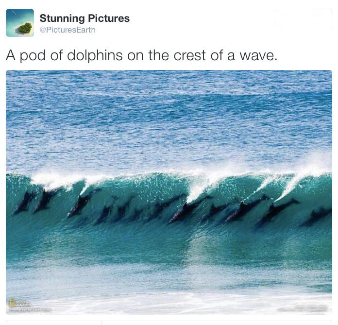 podofdolphinsonthecrestofawaveviastunningpictures