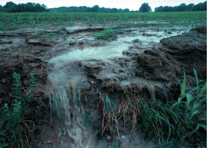 View of runoff, also called nonpoint source pollution, from a farm field in Iowa during a rain storm. Topsoil as well as farm fertilizers and other potential pollutants run off unprotected farm fields when heavy rains occur. (Credit: Lynn Betts/U.S. Department of Agriculture, Natural Resources Conservation Service/Wikimedia Commons)