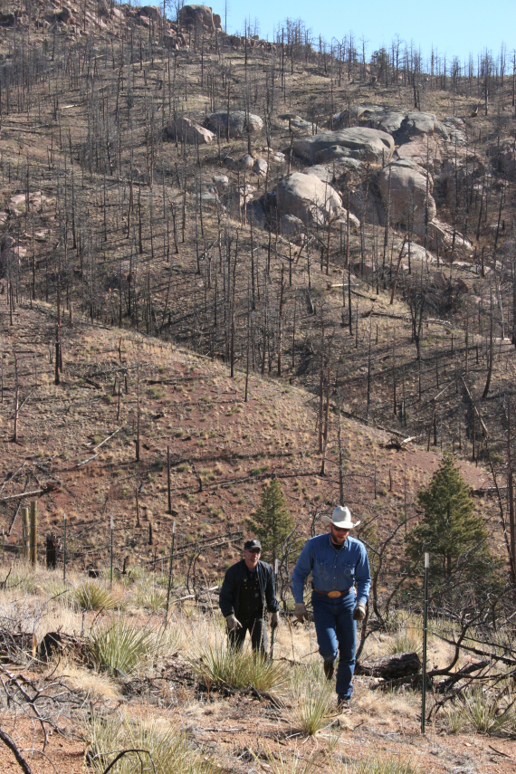 Slopes above Cheesman Reservoir after the Hayman fire photo credit Denver Water.