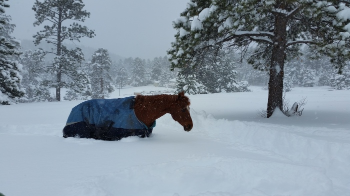 Sophie in the snow near Evergreen, April 17, 2016, via Laura Wing.