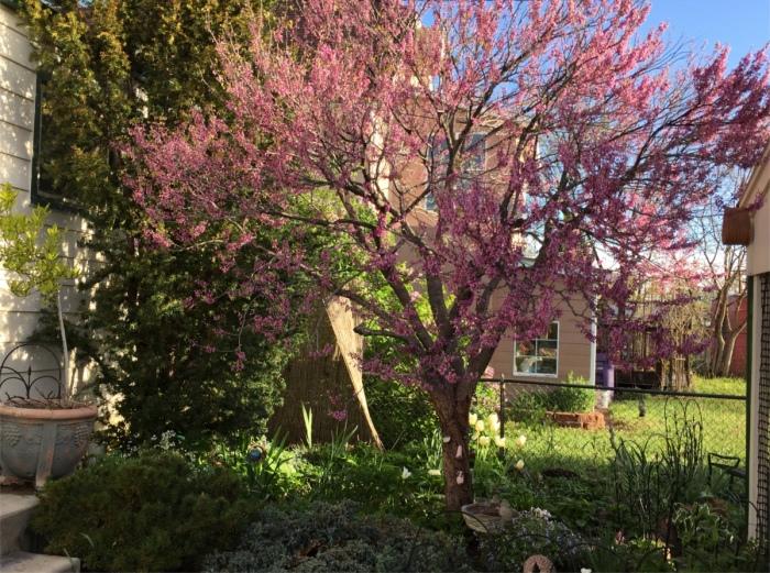 Mrs. Gulch's Moon Garden May 8, 2016