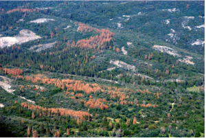 Photo: Tree mortality in the southern Sierra Nevada mountains, California. Credit: USFS