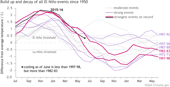 Temperatures in the Niño3.4 region of the tropical Pacific compared to the 1981-2010 average for 2015-16 (black line) and for other moderate-to-strong El Niño years since 1950. The two strongest previous events (1982-83 and 1997-98) are shown in magenta, four more strong events in purple, and the moderate events in light gray. The graph starts in July of the first year of El Niño and ends two years later in June. Climate.gov graph, based on ERSSTv4 data.