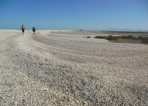 At the Colorado River delta, cheniers of dead clam shells epitomize the carbon dioxide being added to the atmosphere upstream. Photo credit Jansen Smith via Cornell University.