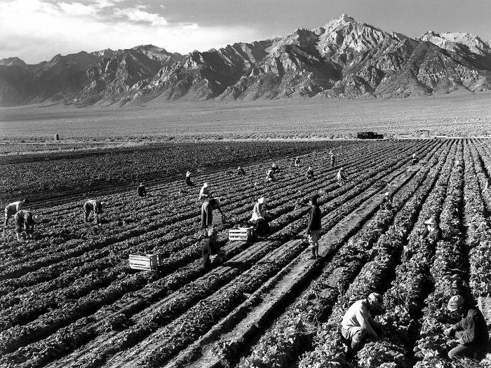 Farm, farm workers, Mt. Williamson in background, Manzanar Relocation Center, California. Photo credit Ansel Adams circa 1943 via Wikimedia.
