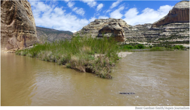 The confluence of the Green and Yampa rivers in 2016. How much water reaches this point, bound for Lake Powell, has implications across the west and Colorado, and an ongoing water study might suggest how to manage water in a severe drought. Photo credit Brent Gardner-Smith.