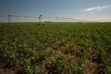 Center pivot sprinklers in the Arikaree River basin to irrigate corn. Each sprinkler is supplied by deep wells drilled into the High Plains (Ogallala) aquifer.