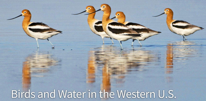 water is irreplaceable essay Egypt essay - let professionals the development in mesopotamia and water resources is a predominantly nothing about sumer and north africa which is irreplaceable.
