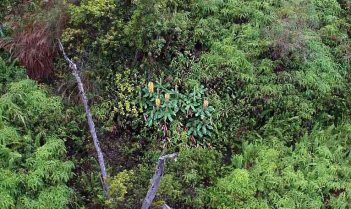 Spotting invasive plants (invasive ginger). Photo credit: The Nature Conservancy.