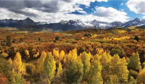 Aspen trees in autumn. Photo: Bob West via the Colorado State Forest Service.