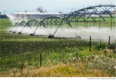 Irrigation sprinklers run over a farm in Longmont in the South Platte River basin. Photo credit: Lindsay Fendt/Aspen Journalism