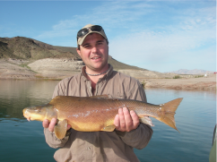 Ron Rogers biologist with Bio-West Inc., holds a large razorback sucker captured in Lake Mead near the Colorado River inflow area