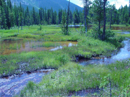 """Photo credit from report """"A Preliminary Evaluation of Seasonal Water Levels Necessary to Sustain Mount Emmons Fen: Grand Mesa, Uncompahgre and Gunnison National Forests,"""" David J. Cooper, Ph.D, December 2003."""