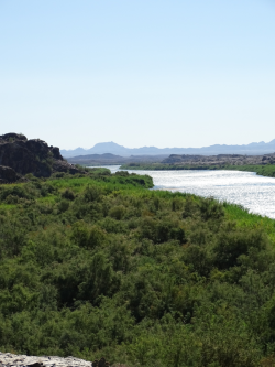 The Colorado River at the Imperial National Wildlife Refuge near Cabin Lake, Arizona. Photo credit: USGS
